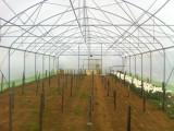 450 m2 fóliasátor