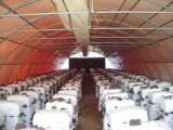 240 m2 alagút gombaház (Pleurotus)