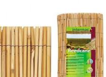 Bambusová ploty