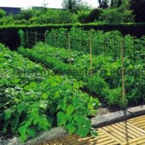 Podporné siete pre rastliny