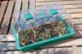 Rapid Grow mini skleník