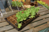 Nortene Growing Pots rašelinový črepník