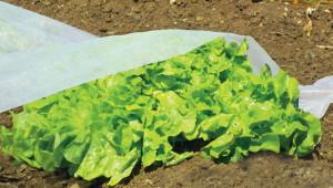 Hlavný obraz produktu Nortene Climatic 17 záhradkárska folia
