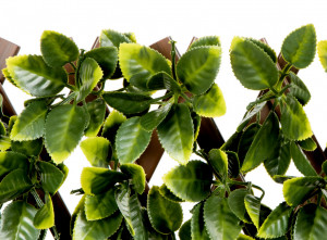 Hlavný obraz produktu Nortene Flexigreen mriežka s PE lístím zeleny 1x2 m