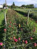 Sieť na podporu kvetov 1,2x500 m