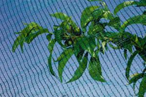 Hlavný obraz produktu Ochranná sieť proti krupobitiu, háčkovaná 2x10m
