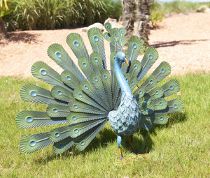 Hlavný obraz produktu Páv Peacock Nortene