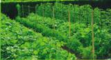 Sieť na uhorky 1,7x10 m