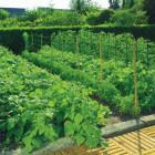 Növénytartóháló